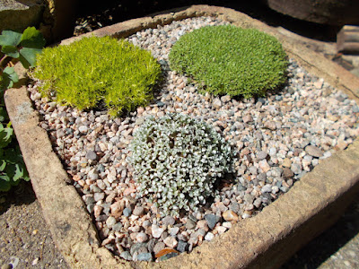 Alpine planter Change your garden - what can you add this year? Green Fingered Blog