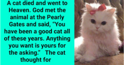 Laugh of the Day: A cat died and went to Heaven. God met the animal at the Pearly Gates and said