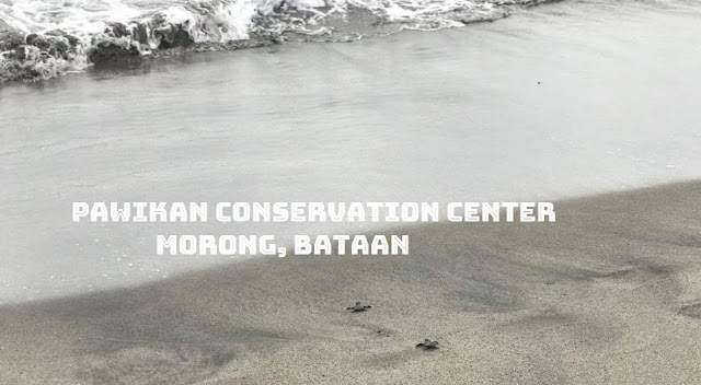 Pawikan Conservation Centre in Morong Bataan