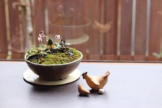 山野草盆栽 ニワトリとヒヨコと卵の人形と共に