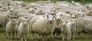 Catholic Daily Reading + Reflection (Homily), Sunday 18 July 2021 - Like Sheep Without A Shepherd