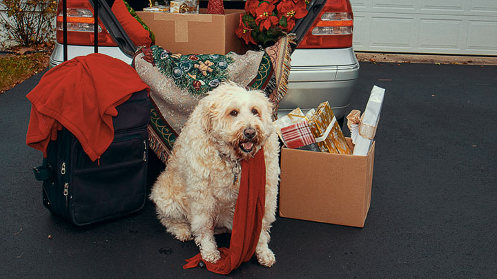 traveling-with-dog-to-mexico