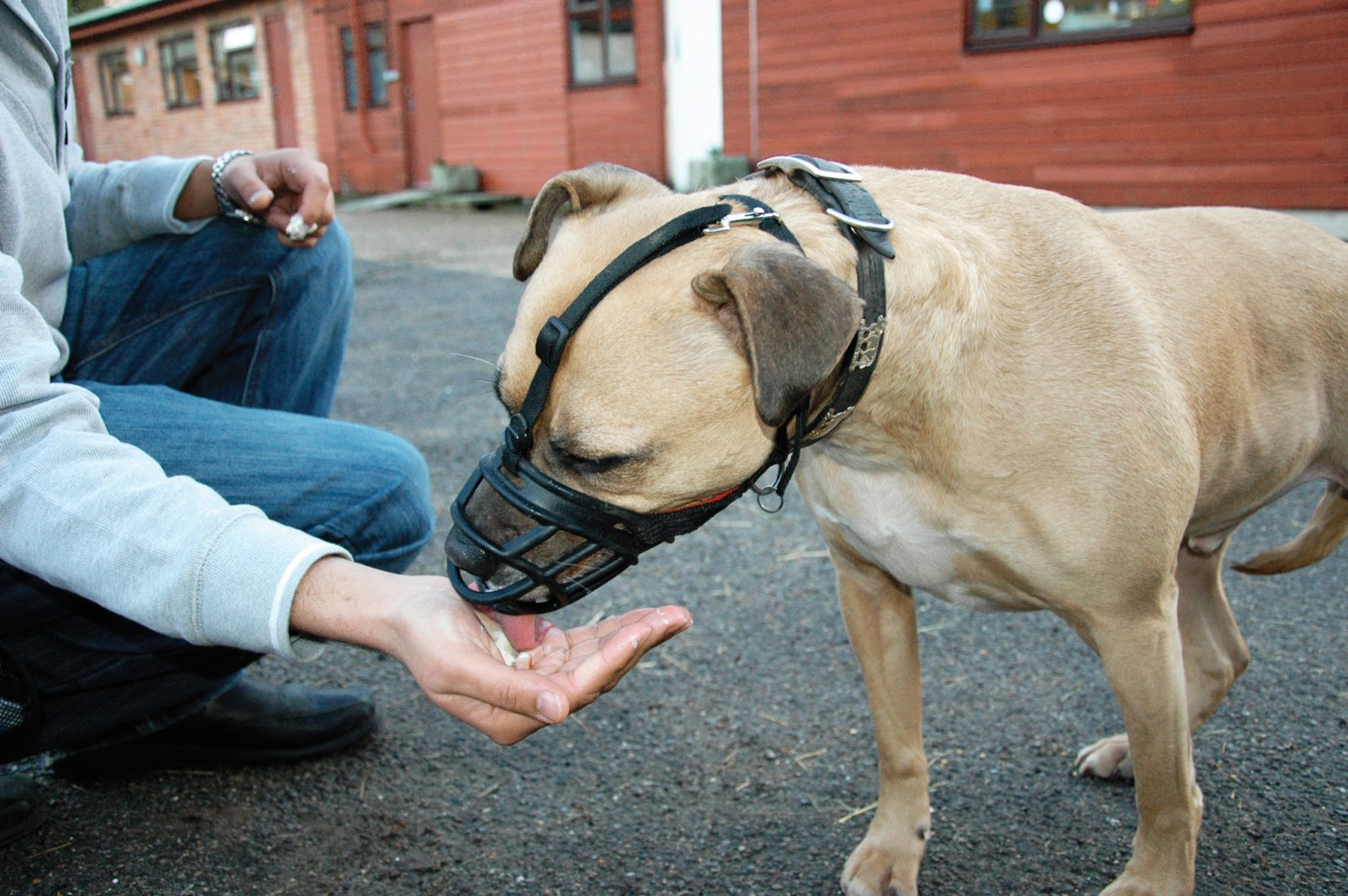 How To Get Rid Of Fleas On Dogs The Safe And Natural Way