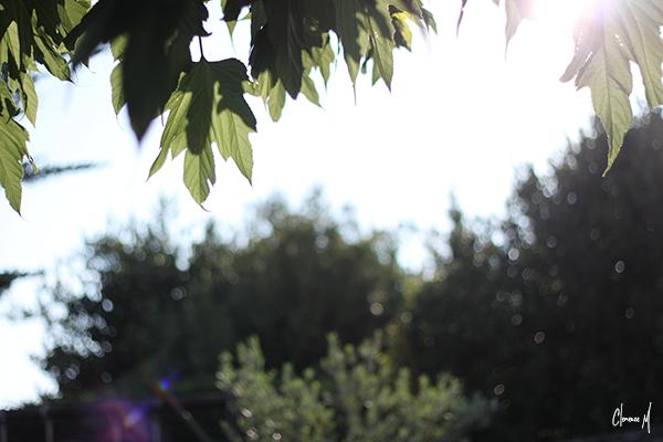 feuilles soleil ile de ré