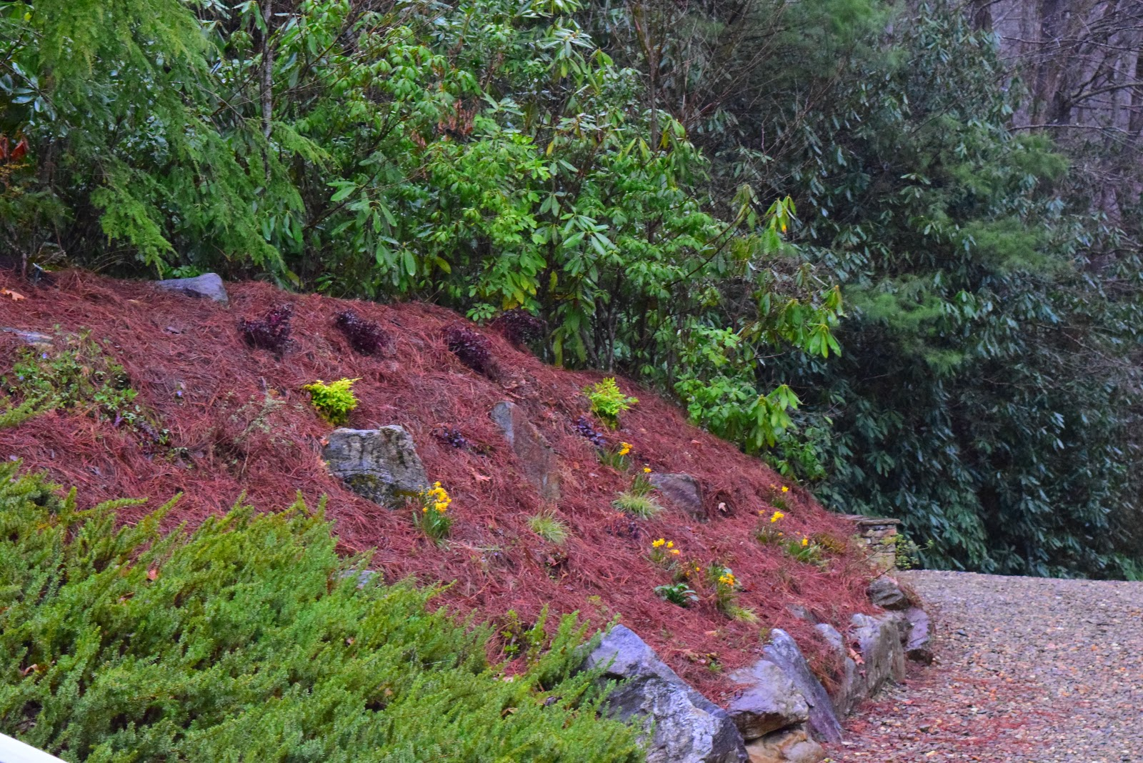 My Ugly Mound Gets A Southern Living Makeover The Dirt Diaries
