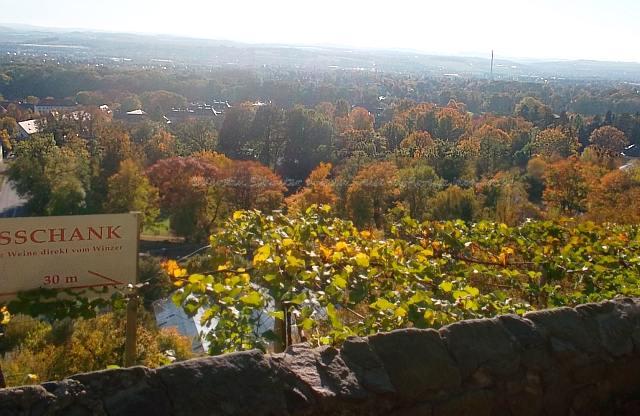 Panoramablick vom Weingut Rogge in Pillnitz genießen