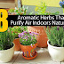 8 Air-Purifying Herbs #Plants