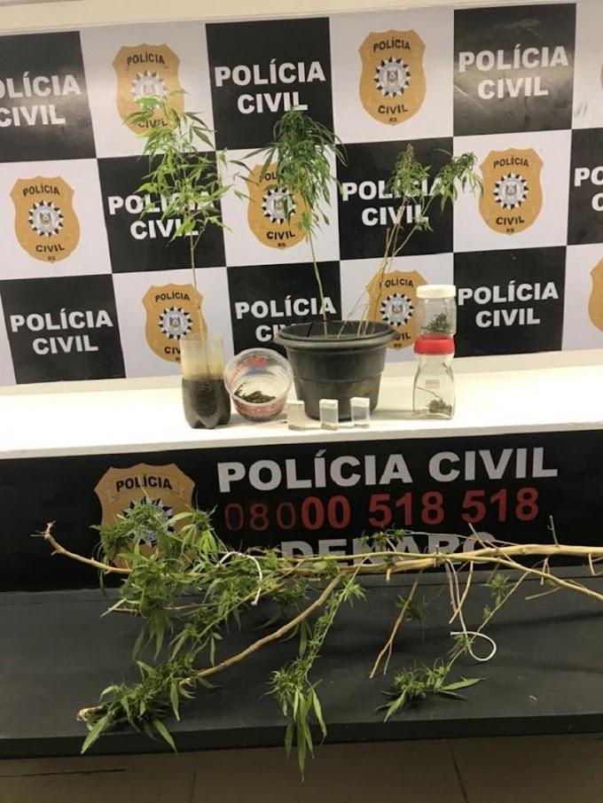Funcionário público estadual é preso em flagrante por cultivar plantas de maconha em casa