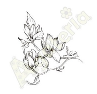 https://sklep.agateria.pl/en/flowers/722-magnolia-5902557824144.html