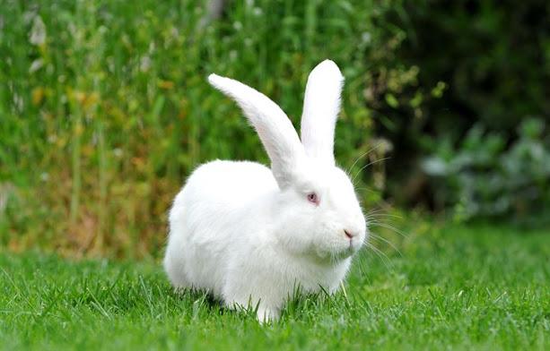 Rüyada tavşan görmek ne demek? rüyada beyaz renkli tavşan görmek, tavşan yavrusu görmek yakalamak, tavşan avlamak, öldürmek, sevmek ne demek?