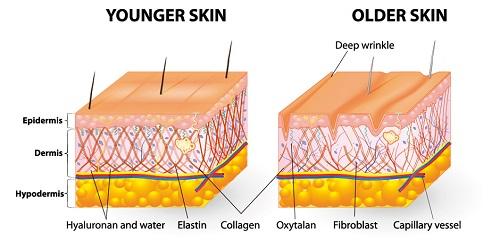 Collagen trắng da giúp làn da luôn trắng hồng mịn màng
