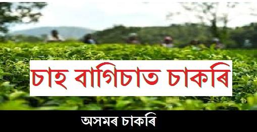 Job in Tea Garden in Assam 2019: Manager/Asstt. Manager/Accountant/Trainee/Doctor