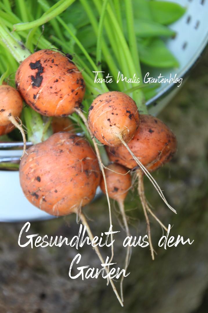 Karotten und Zuckerschoten geerntet