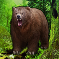 Bigescapegames Grizzly Bear Forest Escape