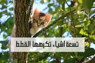 تحب القطط الاستقرار ، وبالنسبة لمعظمهم ، حتى القليل من النقل من نقطة إلى أخرى يمثل الكثير من التوتر. لمساعدة قطتك على الشعور بالتحسن ، لا تطعم الحيوان الأليف قبل الركوب مباشرةً ،