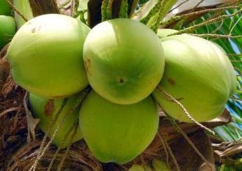 12 Manfaat Air kelapa Hijau yang mengagumkan