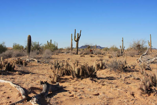desierto, subtropical, edupunto, tropico, arenoso