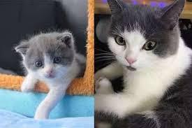Keberhasilan Kloning Kucing Pertama di Dunia