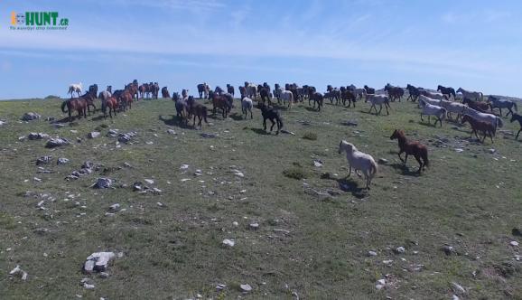 Τα άγρια άλογα του Φαλακρού....VIDEO