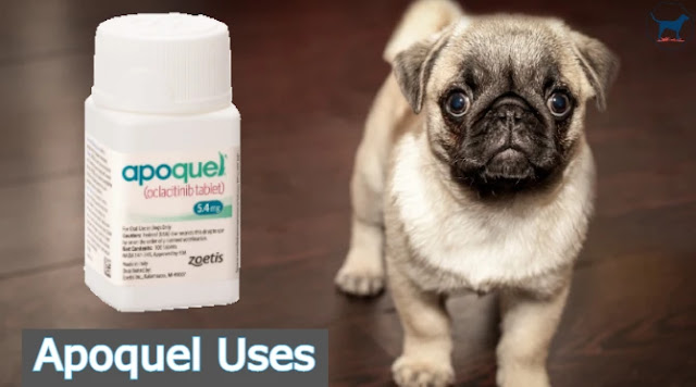 apoquel-uses-for-dogs