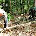 Mbah Karto Terharu, Saat Satgas TMMD Bantu Mencari Bambu