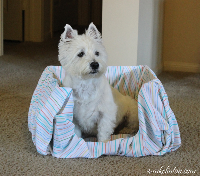 Westie in a box bed