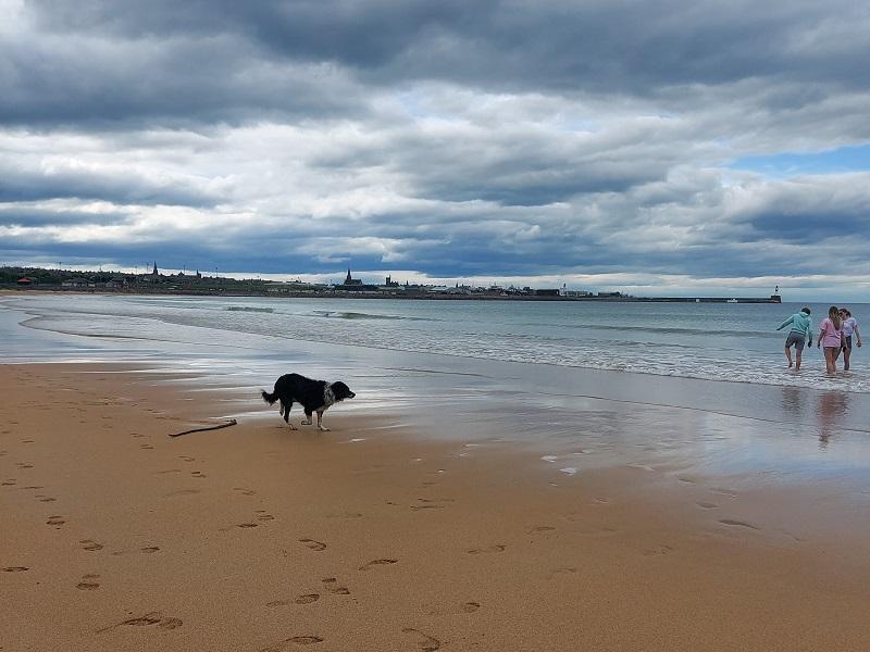 Collie dog running on Fraserburgh beach