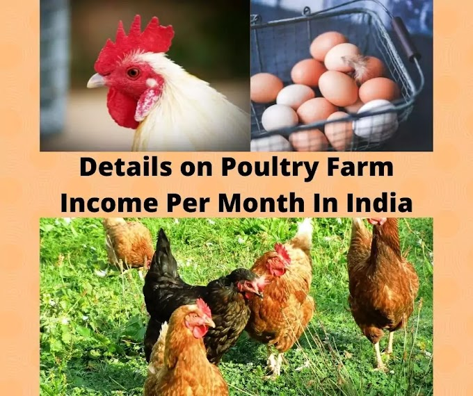 Details on Poultry Farm Income Per Month In India For You