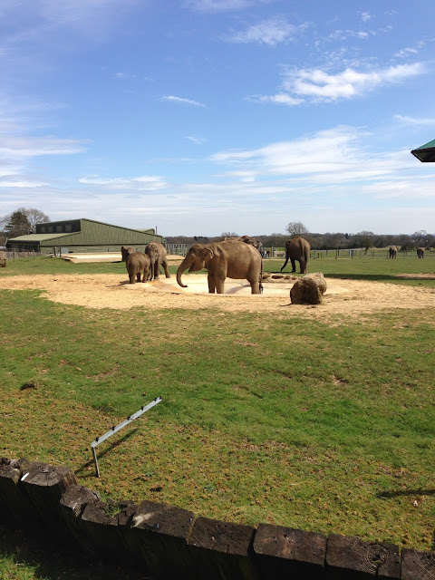 A view of elephants standing in the middle of their enclosure
