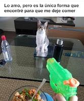 como alejar al gato de la comida humor