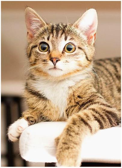 Cats, Cats Breeds, Cats Funny, Cats Cute,