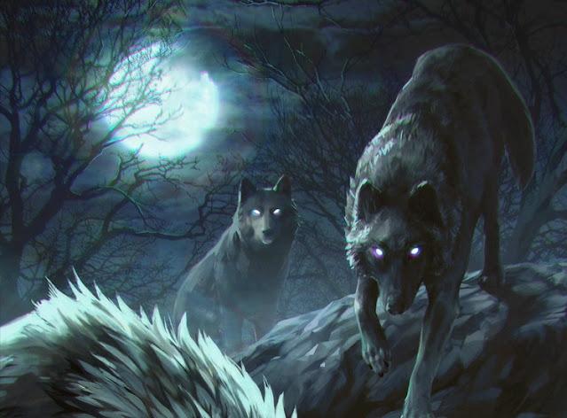 عين الذئب بالليل