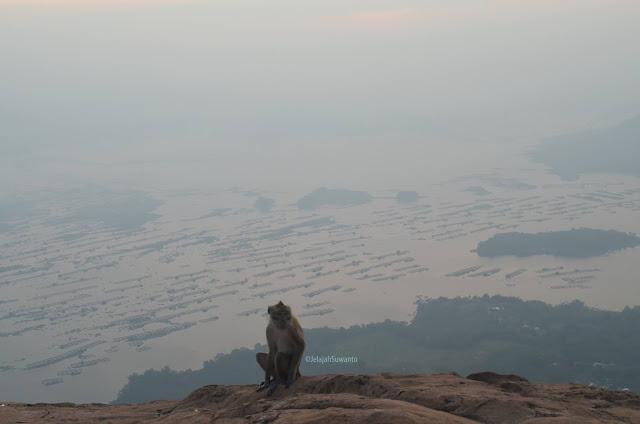 Monyet di bibir Batu Lembu Gunung Lembu Purwakarta | JelajahSuwanto