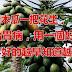 一個木瓜一把花生,專治胃病,用一個好一個,胃不好的越早知道越好。