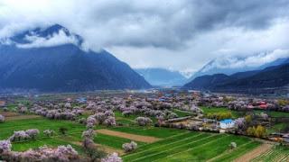 西藏桃花節深度遊12日(波密、然烏、珠峰、納木措)