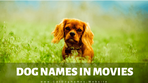 Dog Names In Movies: Awesome Dog Names From Movies 2020