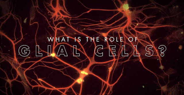What is the Role of Glial Cells? | El Paso, TX Chiropractor