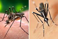Nova linhagem do vírus da zika está em circulação no Brasil e pode originar epidemia, diz estudo