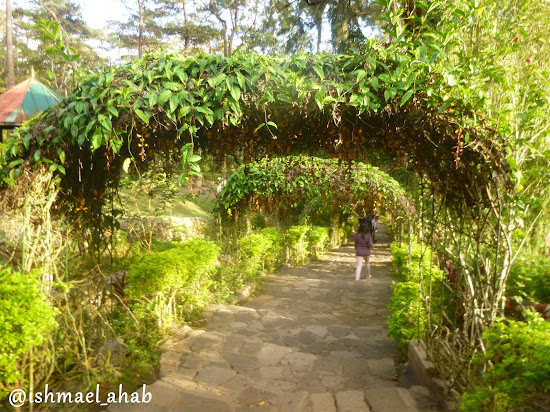 Green arch in Baguio Botanical Garden