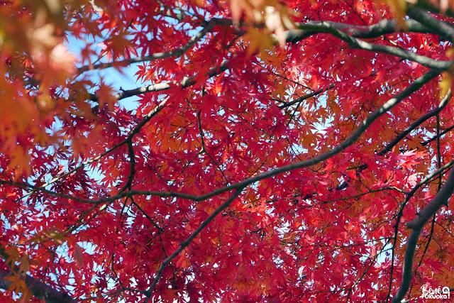展開稲荷神社の紅葉、太宰府、福岡