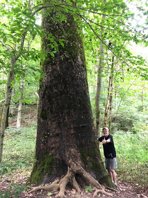 A very big tree on the Mammoth Cave trail.