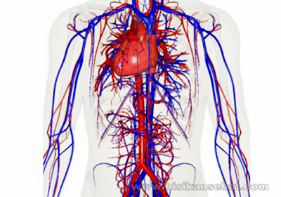 10 Cara Alami Melancarkan Sirkulasi Peredaran Darah