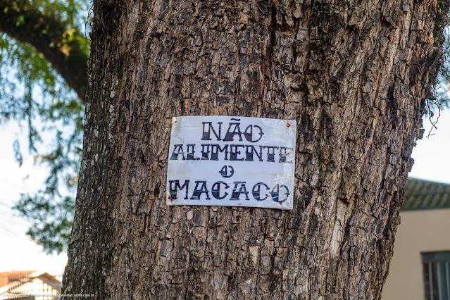 """Cartaz no tronco de uma árvores, onde está escrito """"não alimente o macaco"""""""