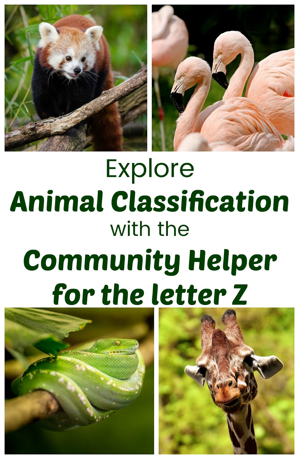 Learn About Animal Classification With The Community