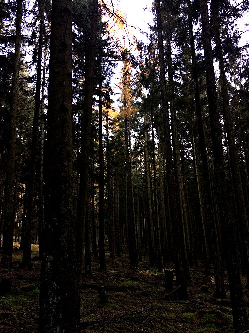 diegutendinge blog natur photography