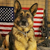 Remembering Our Military Dogs: A Tribute On This Memorial Day