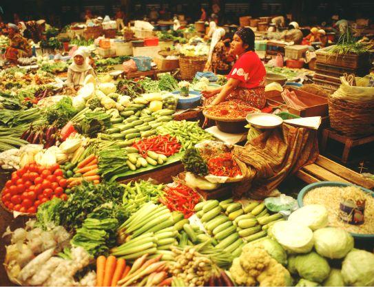 Cat Food Sample Malaysia