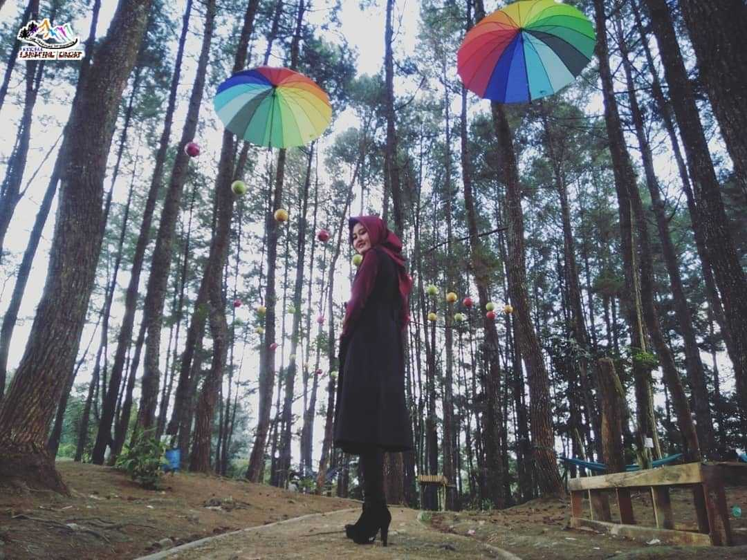 Hutan Pinus Sumberjaya, Lampung Barat