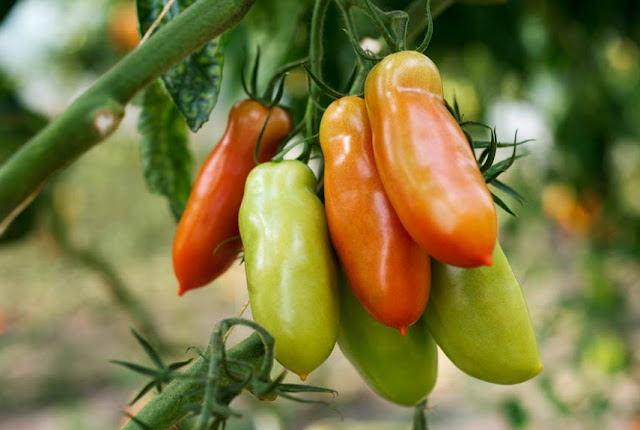 Gemüse produzieren ohne chemisch-synthetische Pestizide: Es ist machbar!