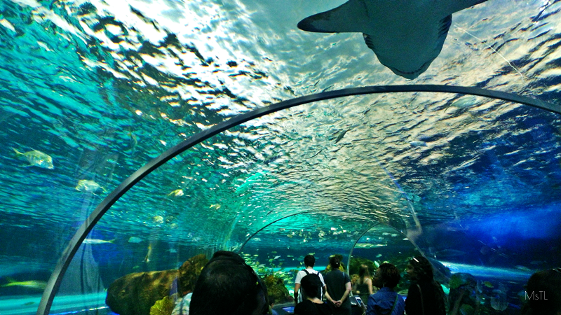 Ripleys-Aquarium-Underwater